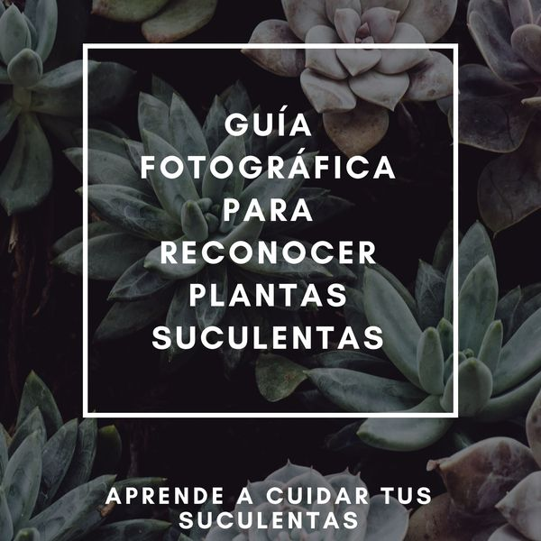Imagem principal do produto Guía fotográfica para reconocer plantas suculentas.