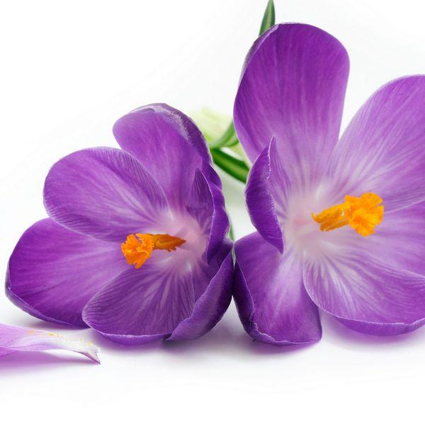 Imagem principal do produto Terapeuta em Aromaterapia