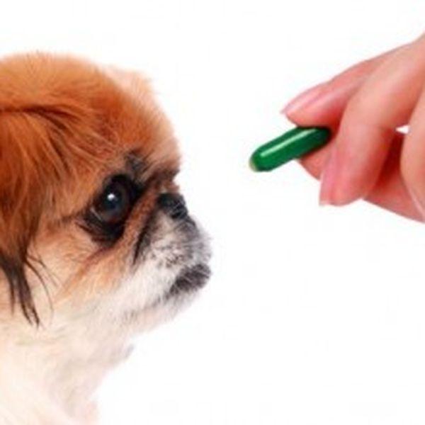Imagem principal do produto Fitomedicina en Pequeños Animales