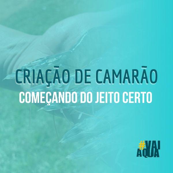 Imagem principal do produto Criação de Camarão: começando do jeito certo!