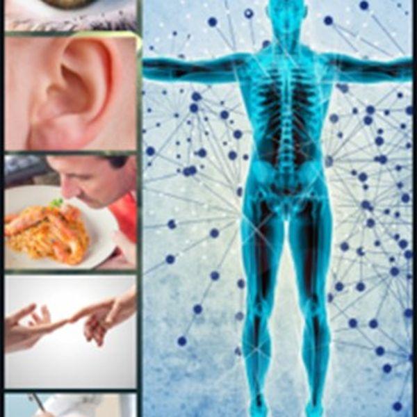 Imagem principal do produto Gestão e Corpo Humano - Órgãos Sensoriais