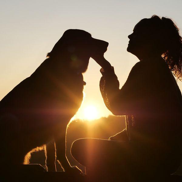 Imagem principal do produto Comment éduquer son chien