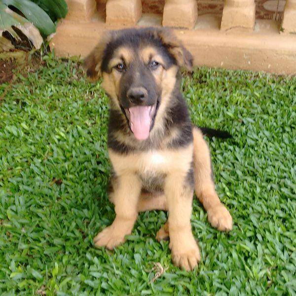 Imagem principal do produto Gomes & Pets Adestramemto