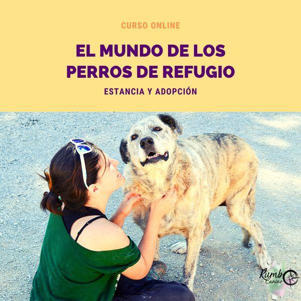 Imagem principal do produto El mundo de los perros de refugio: estancia y adopción