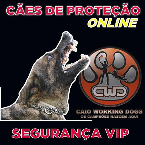 Imagem principal do produto FORMAÇÃO DE CÃES DE PROTEÇÃO