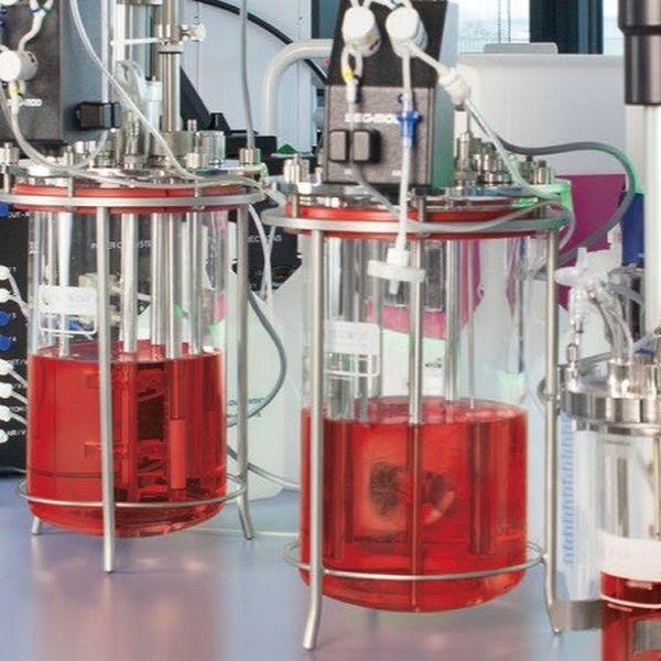 Imagem principal do produto Fundamentos Básicos y no tan Básicos de la Bioquímica