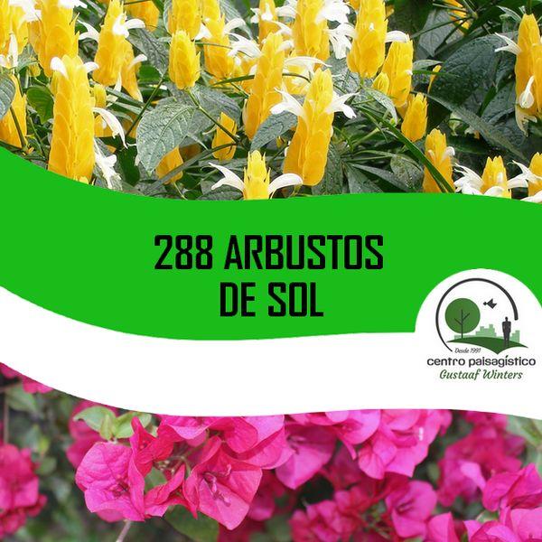 Imagem principal do produto 288 Arbustos de Sol